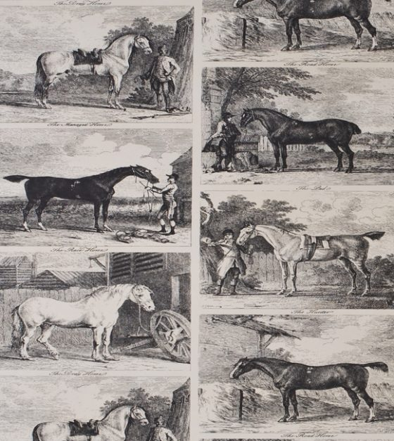Gilpin Horses SW89