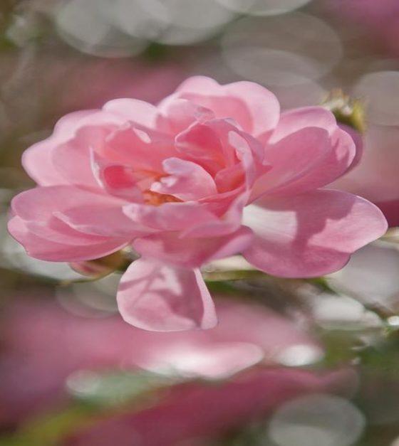 Bouquet SM1