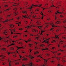 Roses SM23