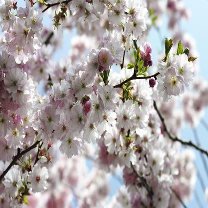 Spring SM57