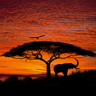 African Sunset SM59