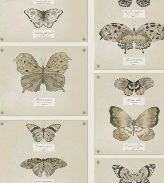 Papilio SW139