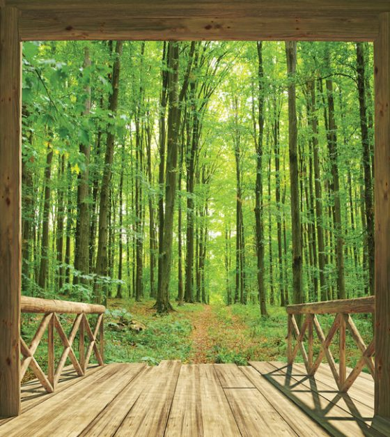 Woodland Forest SM108